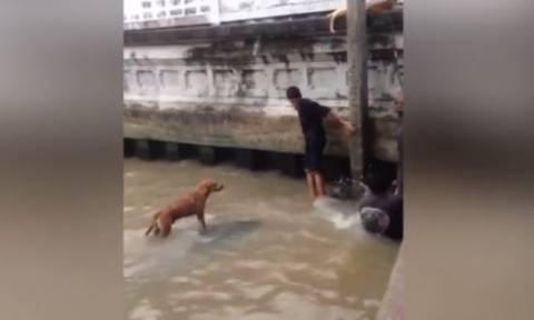 Η θαρραλέα διάσωση σκύλου από εφήβους (vid)
