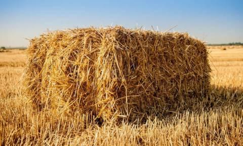 ΟΠΕΚΕΠΕ - Ενιαία Ενίσχυση: Πότε θα καταβληθεί στους αγρότες - Ποιες πληρωμές ακολουθούν