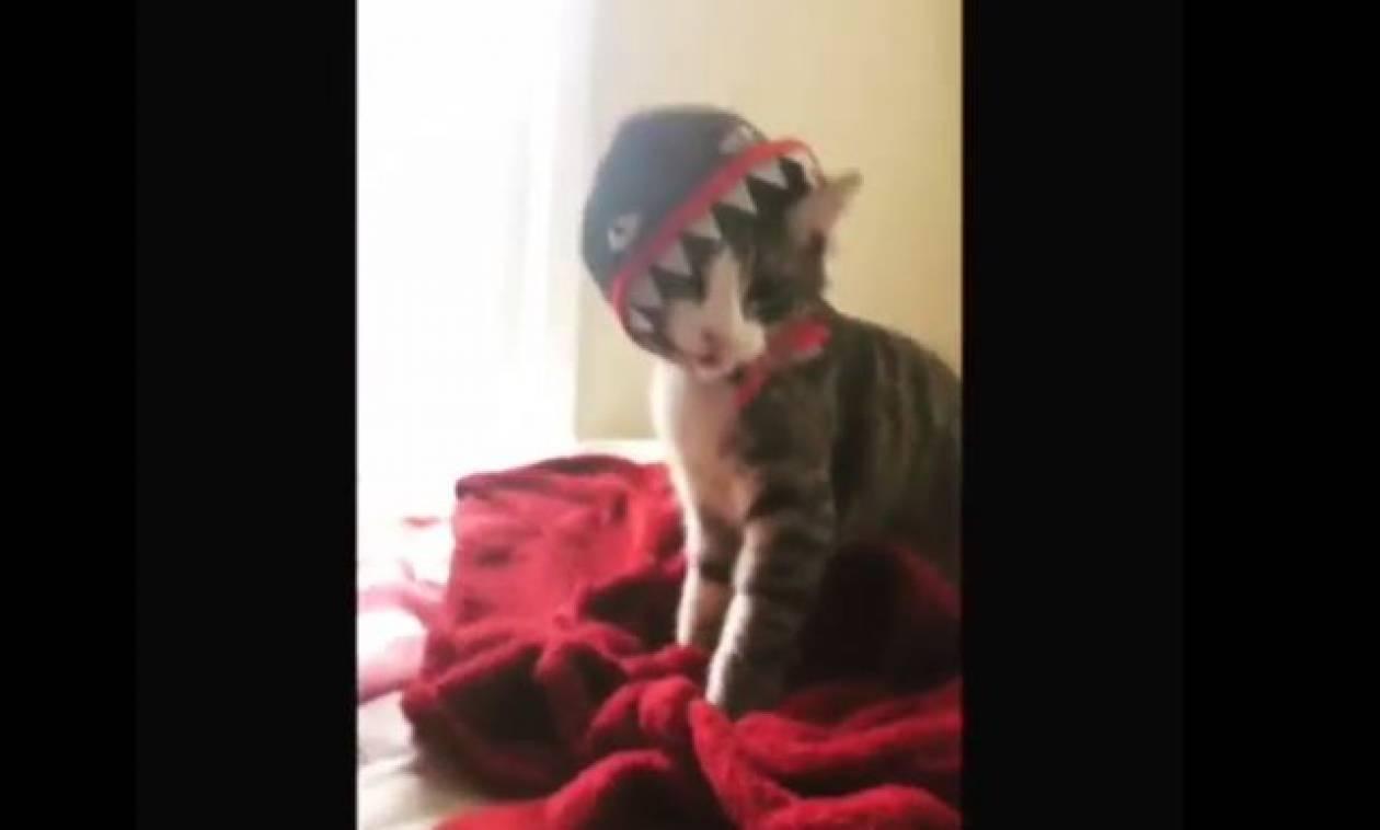 Ο γάτος που περιμένει πώς και πώς το… Halloween (vid)
