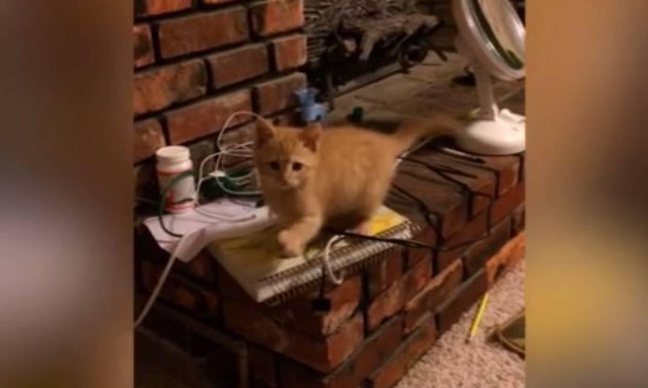 Το γατάκι που μιμείται… το αφεντικό του (vid)