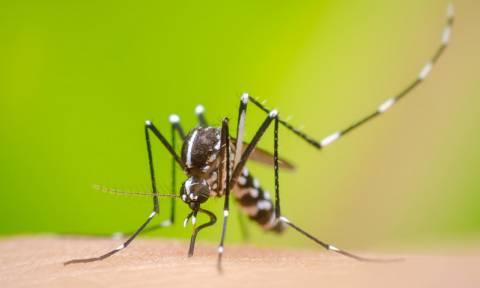 Ινδία: Επέστρεψε ο εφιάλτης του ιού Ζίκα με 80 επιβεβαιωμένα κρούσματα