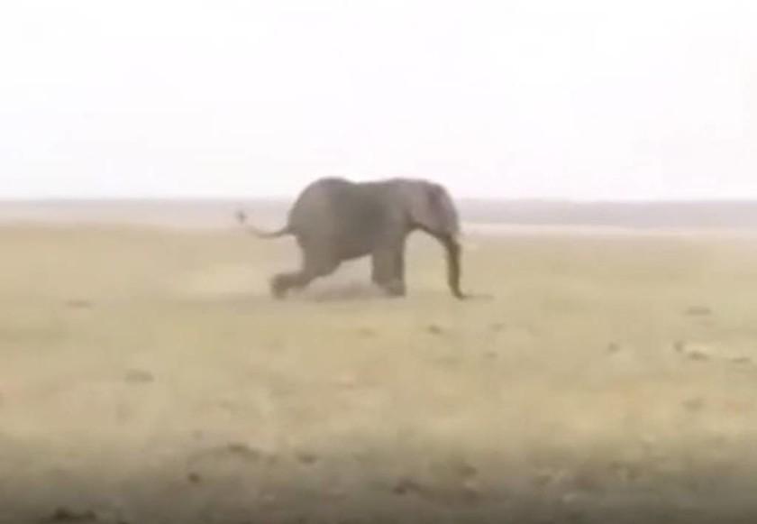 Κυνηγοί σκοτώνουν ελέφαντα από κοπάδι και οι υπόλοιποι κάνουν κάτι απίστευτο για να εκδικηθούν (vid)