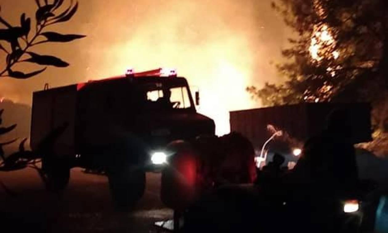 Συναγερμός στην Πυροσβεστική: Μεγάλη φωτιά καίει την Ηλεία