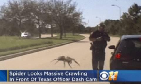 Τρόμος: Γιγάντια αράχνη κόβει βόλτες σε δρόμο του Τέξας! (vid)