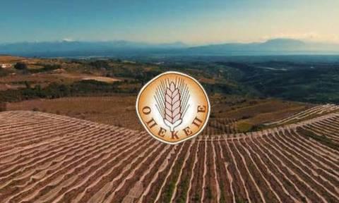 ΟΠΕΚΕΠΕ: Ανακοινώθηκε η ημερομηνία πληρωμής του 70% της βασικής ενίσχυσης