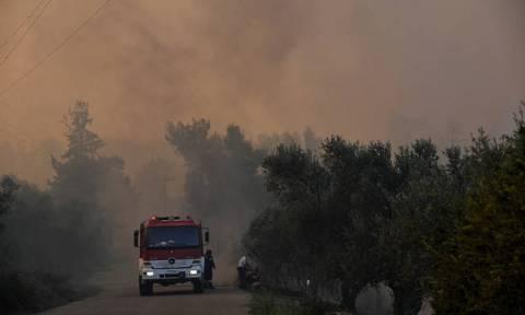 В Греции на полуострове Ситония бушует пожар