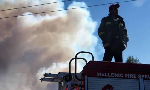 В Греции в регионе Халкидики продолжается борьба с лесным пожаром