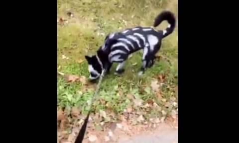 Ο… τρομακτικότερος σκύλος του κόσμου (vid)