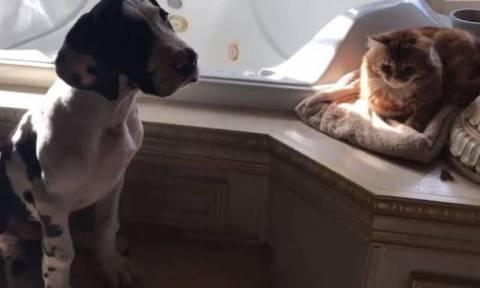 Ο σκύλος που σέβεται… υπερβολικά τον προσωπικό χώρο μιας γάτας (vid)
