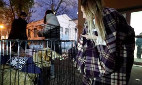 Ρωσία: Άφησαν έξω από τα γραφεία εφημερίδας κλουβιά με... πρόβατα (pics)