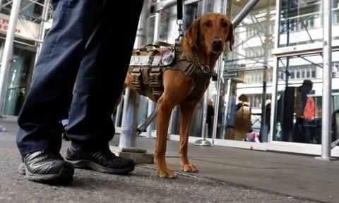 Εκτός από ναρκωτικά, οι σκύλοι μπορούν να «ανιχνεύσουν» και την ελονοσία μυρίζοντας... κάλτσες!