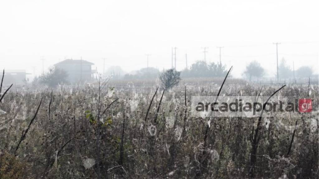 Τρίπολη: «Πάγωσαν» όταν είδαν από κοντά αυτές τις «απόκοσμες» εικόνες