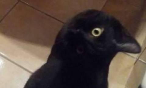 Φοβερό δίλημμα: Γάτα ή κοράκι είναι τώρα αυτό;