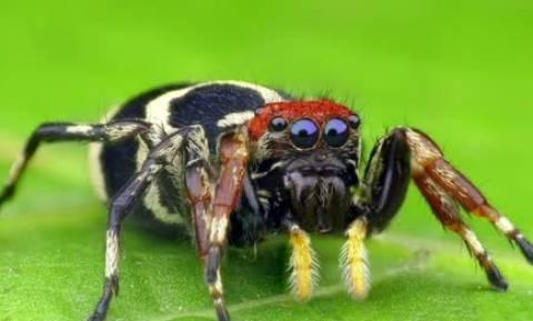 Αυτή η αράχνη θα σας κάνει να την λατρέψετε... (video)