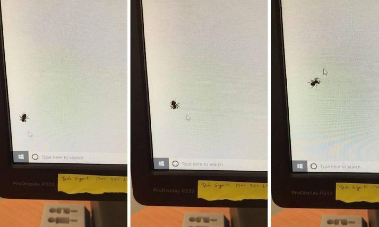 Είδε στην οθόνη του υπολογιστή του μια αράχνη! Δείτε τι της έκανε με τον κέρσορα του ποντικιού (Vid)