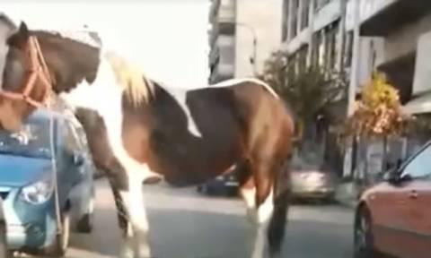 Απίστευτο: Άλογο κόβει βόλτες στο κέντρο της Θεσσαλονίκης (vid)