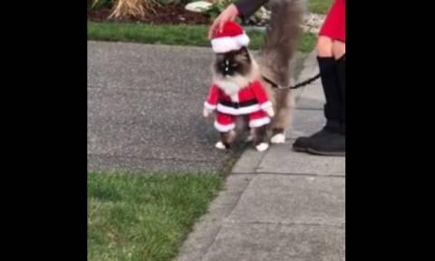 Φέτος ο Άγιος Βασίλης θα είναι… γάτα (vid)