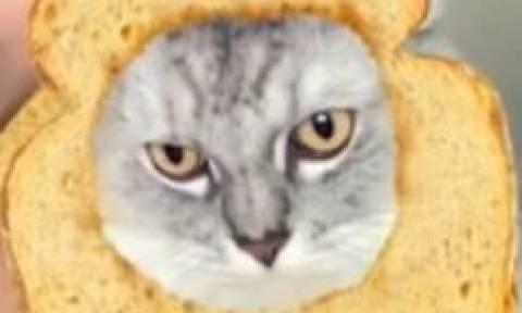 Η γάτα που μισεί τα φίλτρα του Snapchat! (vid)