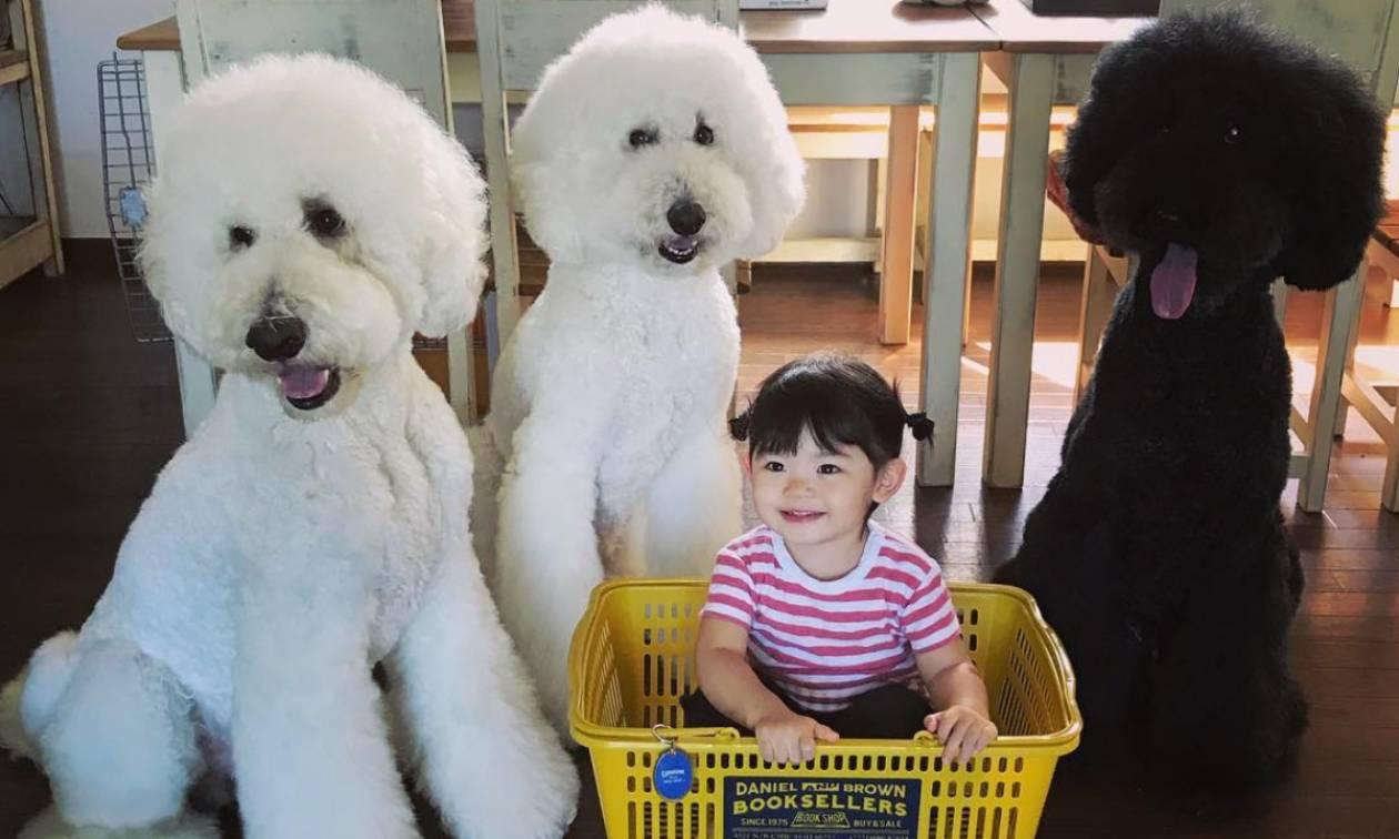 Η μικρή Γιαπωνεζούλα φωτογραφίζεται με τα τεράστια σκυλιά της και το Instagram λιώνει (pics)