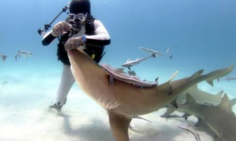 Ψαράς ρίχνει για τσιπούρες και πιάνει καρχαρία! Αυτό που ακολουθεί δεν περιγράφεται (video)