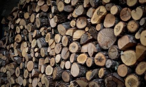 Τραγωδία στο Αγρίνιο: Έπεσε νεκρός μπροστά στη μητέρα του ενώ έκοβαν ξύλα