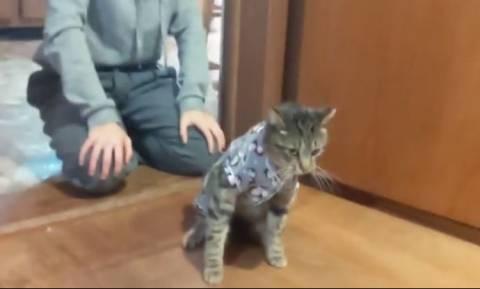 Ένας γάτος που μισεί τις… πιτζάμες (vid)