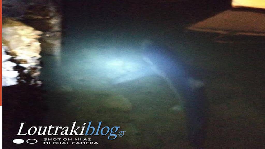 Πανικός στο Λουτράκι: Καρχαρίας 2 μέτρων κόβει βόλτες στο λιμάνι – Δείτε το βίντεο – ντοκουμέντο