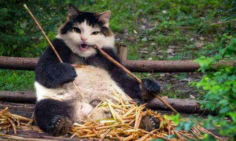 Τύπισσα παίρνει τα κεφάλια από τις γάτες και τα βάζει στα πρόσωπα άλλων ζώων!