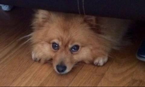Κλεμμένη σκυλίτσα βρέθηκε 483 χιλιόμετρα μακριά από το σπίτι της ένα χρόνο μετά!