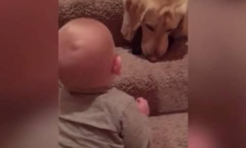 Το απίστευτο γέλιο μωρού με τον αγαπημένο του τετράποδο φίλο (vid)