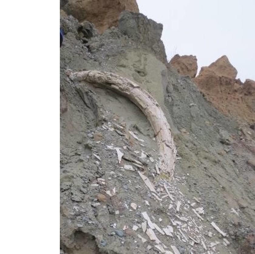 Σπάνιο εύρημα στην Κοζάνη: Εντόπισαν προϊστορικό χαυλιόδοντα μήκους δύο μέτρων! (pics)
