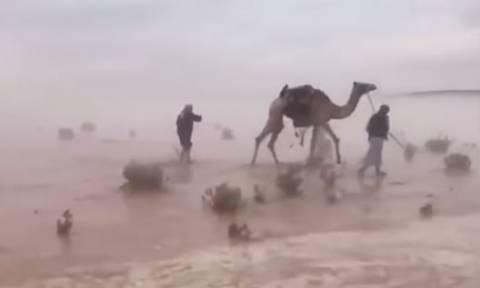 Η έρημος στη Σαουδική Αραβία όπως δεν την έχετε ξαναδεί μετά τις σφοδρές βροχοπτώσεις! (vid)