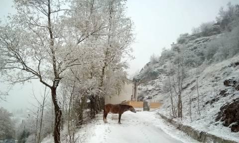 Καιρός: Πέφτουν τα πρώτα χιόνια στη χώρα μας – Δείτε LIVE πού χιονίζει αυτή την ώρα