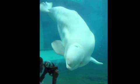 Η φάλαινα που λατρεύει το… χορό (vid)
