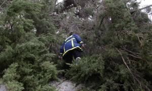Ανεμοστρόβιλος σάρωσε τη Σητεία: Τεράστιες καταστροφές