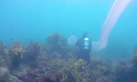 Δύτες στη Νέα Ζηλανδία ανακάλυψαν μυστηριώδες πλάσμα