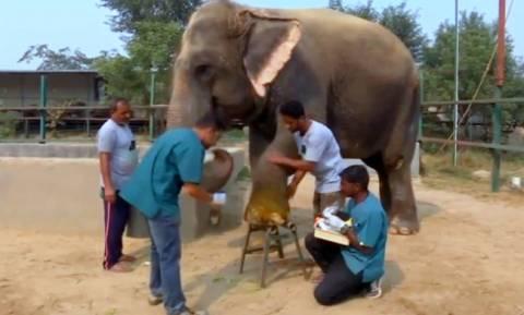 To πρώτο νοσοκομείο για ελέφαντες είναι γεγονός!
