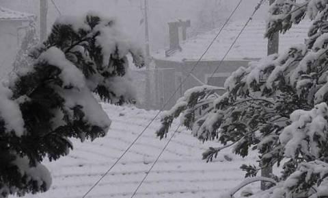 Κακοκαιρία - Κοζάνη: Κλειστά όλα τα σχολεία σε Γρεβενά, Πεντάλοφο και Τσοτύλι