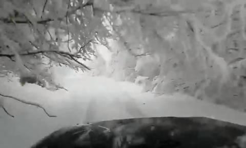 Καιρός: Υπέροχο βίντεο από τον χιονισμένο Όλυμπο