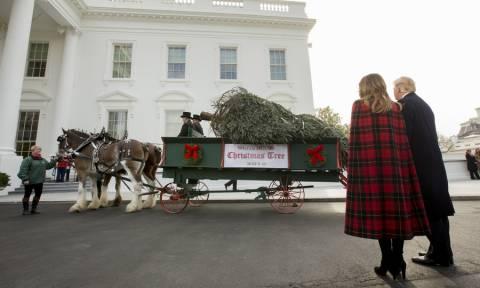 Τα Χριστούγεννα «έφτασαν» στο Λευκό Οίκο: Τραμπ και Μελάνια υποδέχθηκαν το δέντρο (pics)