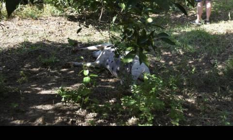 Κτηνωδία στην Κρήτη: Κρέμασαν σκύλο σε γέφυρα (pic)