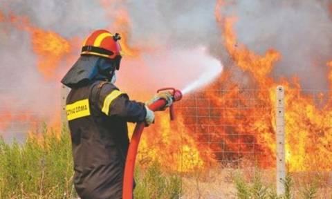 Τρίκαλα: Κεραυνός έκαψε δεκάδες πρόβατα