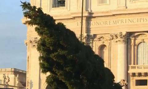 Χριστούγεννα στη Ρώμη: Το παραδοσιακό έλατο έφτασε στην πλατεία του Αγίου Πέτρου (vid)