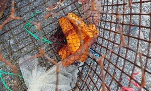 Ρόδος: Τα δίχτυα του ψαρά έκρυβαν… δηλητήριο! Η κίνηση που του έσωσε τη ζωή (vid+pics)