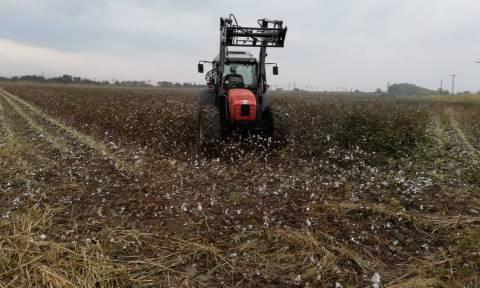 «Νέοι Γεωργοί» της Στερεάς Ελλάδας: Επιπλέον 488 αγρότες στο πρόγραμμα