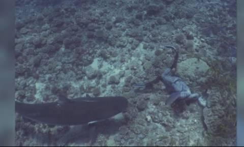 Καρχαρίας εντοπίζει δύτη και τον πλησιάζει με άγριες διαθέσεις... (video)