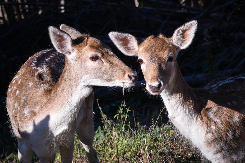 Αυτά τα υπέροχα ελάφια θυμίζουν πόσο όμορφη είναι ζωή στη φύση (pics)