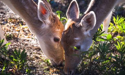 Αυτά τα υπέροχα ελάφια μας θυμίζουν πόσο όμορφη είναι ζωή στη φύση (pics)