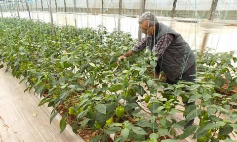 Ιεράπετρα: Λιπάσματα και φυτοφάρμακα «έκαναν φτερά» από θερμοκήπιο