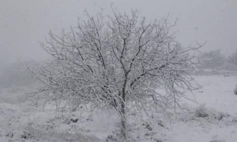 Έκτακτο δελτίο επιδείνωσης καιρού: Έρχονται χιόνια, πτώση θερμοκρασίας και θυελλώδεις άνεμοι
